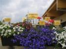 Landesgartenschau Neu-Ulm